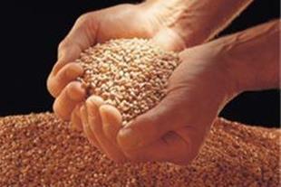 شرکت تهیه وتولید بذر و نهال پیشگامان فارس