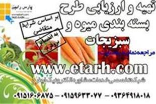 ارائه طرح توجیهی بسته بندی میوه وسبزیجات - 1