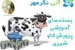 بسته های آموزشی پرورش گاو