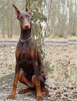 فروش سگهای نگهبان با قیمت ویژه