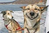پرورش انواع نژاد سگ نگهبان