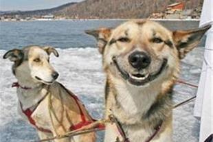 پرورش انواع نژاد سگ نگهبان - 1
