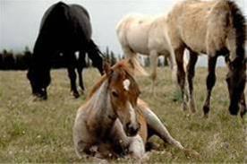 آموزش غیرحضوری پرورش اسب - 1
