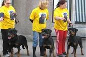 خرید و فروش سگهای نگهبان