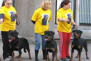 خرید و فروش سگهای نگهبان - 1