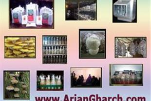 فروش بذر قارچ خوراکی لوازم تولید قارچ صدفی دکمه ای