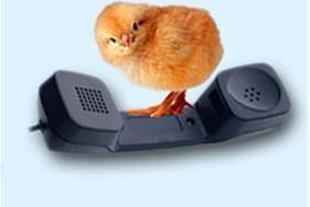 کارگاه آموزشی پرورش مرغ مادر و جوجه کشی