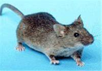 دور کننده الکتریکی موش از مزارع و فضا های بسته