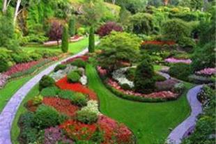 تولید و عرضه انواع گیاهان فضای باز ، آپارتمانی - 1