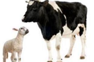 مکمل دام طیور پرمیکس کنسانتره 5%گوشتی