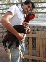 پرورش و فروش کبوتر تهران