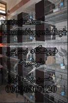 فروشگاه پرندگان زینتی     با نام :  طوطیران