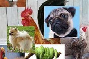 فروش اختصاصی حیوانات خانگی