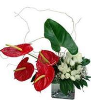 ارسال گل زیباترین زبان گفتگو و شیواترین بیان عاطفه
