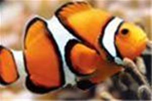 ماهی زینتی آب شور