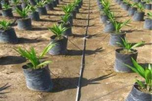 شرکت امفاکو فروش و تأمین تجهیزات کشاورزی و گلخانه