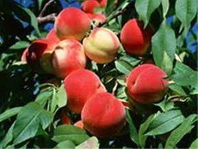 فروش باغ در سهیلیه کرج - 1