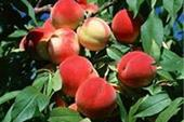 فروش باغ در سهیلیه کرج