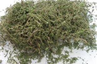 فروش اندام هوایی آویشن باغی (Thymus vulgaris)