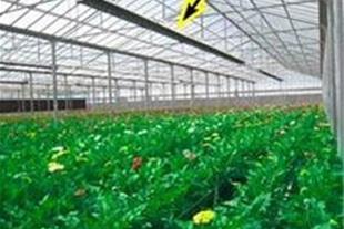 سیستم گرمایشی گلخانه در استان مازندران