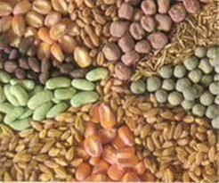 بذر کود سم کشاورزی - 1