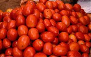فروش گوجه فرنگی درجه یک - 1