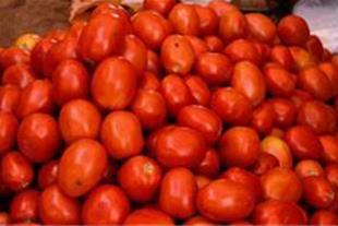 فروش گوجه فرنگی درجه یک
