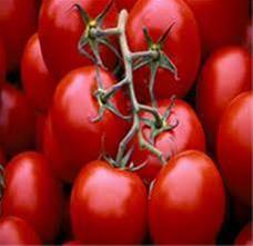 بذر گوجه گلخانه ای - 1