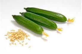 بذر خیار گلخانه سیب سبز - 1