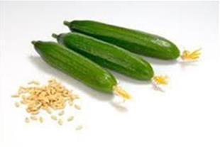 بذر خیار گلخانه سیب سبز