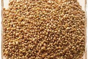 خرید و فروش بذر یونجه