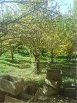باغچه - باقیمت عالی - مناسب جهت ویلا سازی