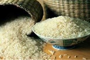ایتا برنج گیلان
