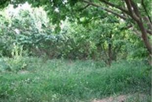 فروش باغ با متراژهای مختلف بهترین نقطه شهریار