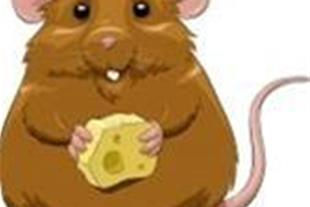 سم موش و حشرات موذی