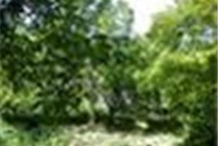 فروش باغ 1000 متری سهیلیه لشگراباد