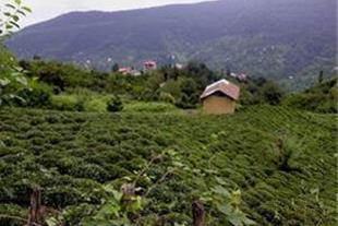 فروش زمین دررامسر دهکده توریستی گانکسر