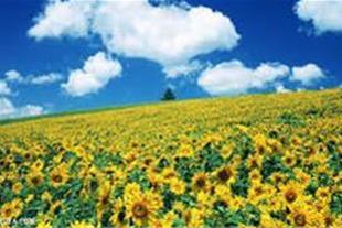 زمین هکتاری کشاورزی سهیلیه کامرانیه