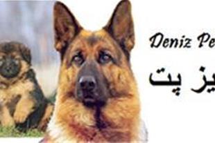 فروش انواع سگ روتوایلر ، ژرمن ، هاسکی ، چاو چاو