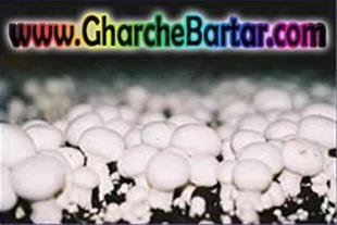 فروش مستقیم تجهیزات سالن قارچ رطوبت ساز مهپاش هیتر