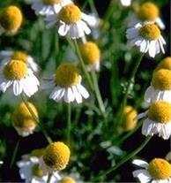 آموزش گیاهان دارویی با مدرک فنی حرفه ای
