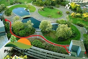 طراحی و اجرای فضای سبز در مشهد ( گیاه و زندگی )