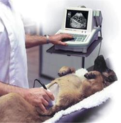 تعرفه درمانی برای حیوانات بی سرپرست - 1