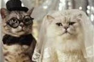 دیگر نگران آینده گربه خود نباشید!
