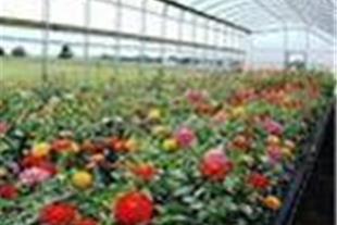 کنترل هوشمند و مانیتورینگ گلخانه