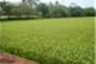 فروش املاک کشاورزی