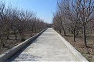 22000 متر باغ مناسب برای شهرک سازی - 1