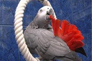 معاینه و درمان تخصصی بیماری های پرندگان زینتی - 1