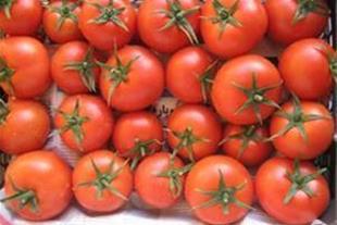 فروش ویژه ی بذر گوجه فرنگی