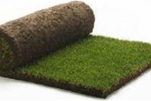 فروش و تولید چمن رول (شرکت مهندسی کاج طلایی فراسو) - 1